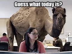 Hump Day Camel Meme - hump day meme guess what today is check out the gif here lolz