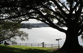 native plants of the sydney region sydney royal botanic gardens and domain significant trees