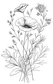 drawn poppy different flower pencil and in color drawn poppy