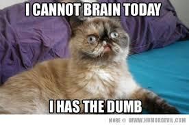 Funny Cats Meme - image funny cat meme love 5 jpg animal jam clans wiki fandom