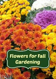 the best flowers for fall gardening moms need to know