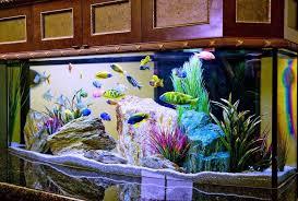 aquarium decorations large unique aquarium decorations oo tray design unique aquarium