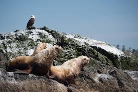 Washington Wildlife Tours images Wine tasting kayak tour of san juan islands outdoor odyesseys jpg
