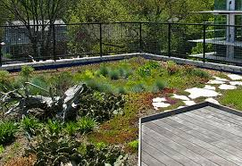 roof garden plants roof gardens portugal resident