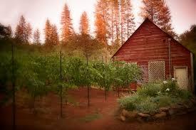 Rustic Barn Wedding Venues Rustic Farm Ranch Barn Venue Vixens