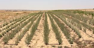 native american healing plants wadi attir the sustainability laboratory