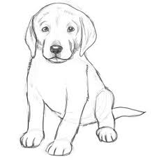 best 25 drawings of dogs ideas on pinterest sketches of dogs