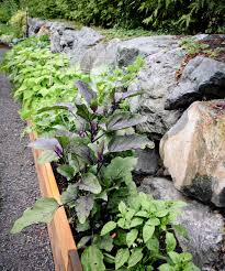 Urban Vegetable Garden by Richmond Beach Vegetable Garden U2014 Seattle Urban Farm Company
