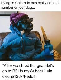 Shredding Meme - 25 best memes about shred the gnar shred the gnar memes