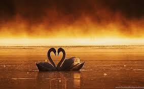 bestlovehdwallpapers com leading best love hd wallpapers site