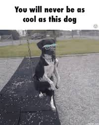 Cool Dog Meme - never gif find share on giphy