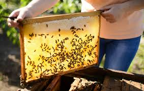 helping honey the logistics of saving bees mini pak u0027r