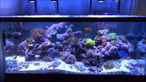 led lights for coral tanks my reef tank under 4 kessil led pendants youtube