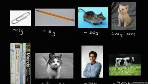 understanding mass grams and kilograms video khan academy