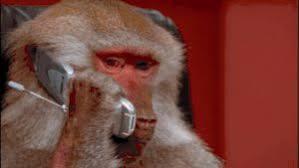Baboon Meme - baboon gifs watch download on gifer