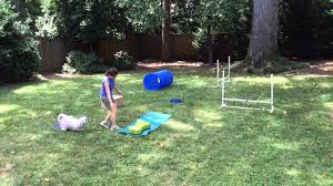 backyard obstacle course for dogs outdoor goods