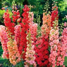 Flower Delivery Free Shipping Aliexpress Com Buy Free Shipping 1 Pack 30seeds Mixed Colourful