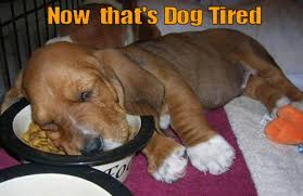 Tired Dog Meme - now that s dog tired