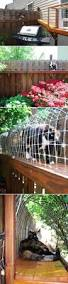 Outdoor Cat Condo Plans by Best 25 Outdoor Cat Enclosure Ideas On Pinterest Catio Cat