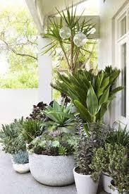 How To Arrange Indoor Plants best 25 potted plants patio ideas on pinterest potted plants