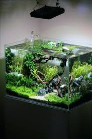 japanese aquascape aquascaping tropical fish tank colorful aquariums fish tanks and