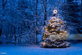 tree with lights in the snow stock photo getty images