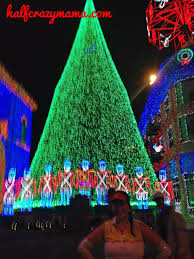 100 medina christmas tree farm seasonal highlights visit
