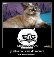 Gato Meme - estalla de risa con memes de gatos humor taringa