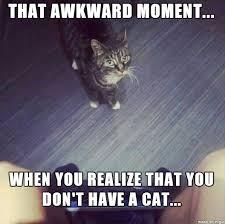 Random Cat Meme - sure random cat in my house no big deal wonder where i got that