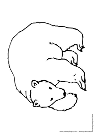 primaryleap uk polar bear colouring 2 worksheet