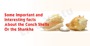 some important and interesting facts about the conch shells or the