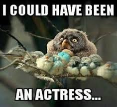 Funny Bird Memes - funny bird memes yahoo search results yahoo image search results