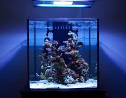 Saltwater Aquascaping 935 Best Aquarist Love Images On Pinterest Cichlids Jack O
