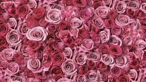 floral wallpaper vintage rose hd desktop wallpapers 4k hd