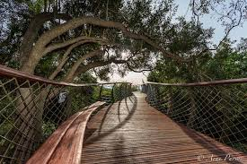 the boomslang tree canopy walkway