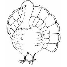 turkey templates printable turkey coloring page coloring pages