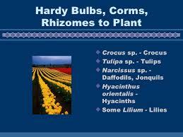 herbaceous ornamentals