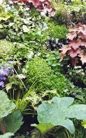 fleurs vivaces rustiques section plantes vivaces archives société nationale d