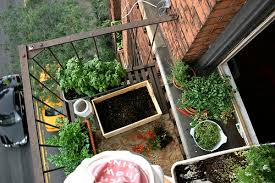 how to plant a vegetable garden in a small space aka your apartment