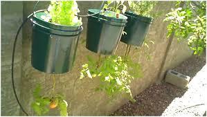 Small Kitchen Garden Ideas by Backyards Innovative Small Vegetable Garden Ideas Backyard