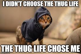 Thug Life Meme - top 26 thug life cat memes thug life meme
