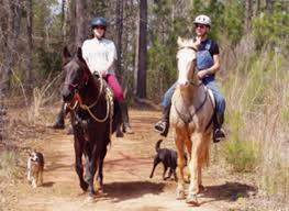 you can build a horse trail expert advice on horse care and