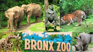 New York wildlife tours images New york bronx zoo wild asia monorail ride jpg