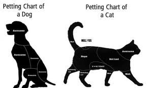 Dog Cat Meme - petting chart of dog n cat funlimits