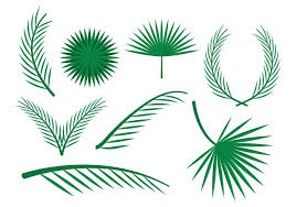 free palm leaves vector ornaments free vector stock