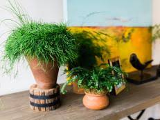 Easy To Care For Indoor Plants Low Maintenance Houseplants Hgtv
