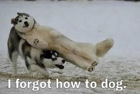 Pun Dog Meme - 10 dog memes that will make you laugh