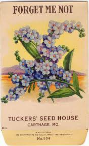 forget me not seed packets 44 best vintage seed packets images on vintage