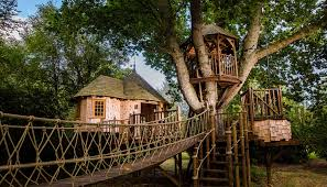 three house timbertop hangout treehouse blue forest treehouses