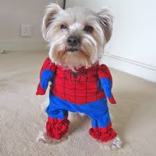 spiderman mask halloween 32 purr fectly cute halloween costumes for pets to look spooky